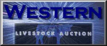 Western Livestock Auction, Midland, Texas